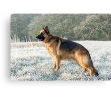 A German Sheperd in the frost Canvas Print