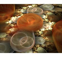 The Slinky Graveyard Photographic Print