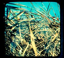 Grass by Jules Campbell