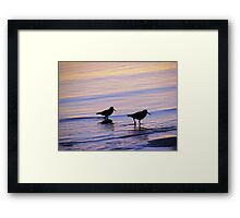 Purple & Blue Pied  Sooty Oystercatcher Sunset Framed Print