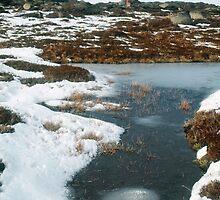 Snow Gum, Bogong High Plains. by Ern Mainka