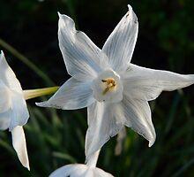 garden star by exhethia