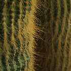 Hothouse cactus - 2014 by Gwenn Seemel