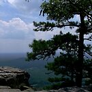 Another View From Pilot Mountain by Lolabud