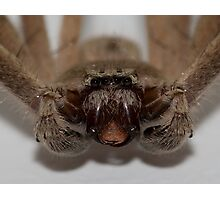 Spider Stare Down Photographic Print