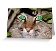 Mr Kitty Camoflauge Greeting Card