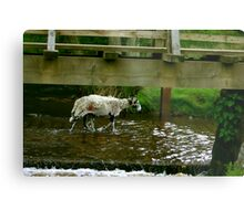 Looking Down and Out Metal Print