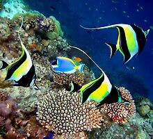 MOORISH IDOLS - MALDIVES by Michael Sheridan