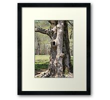 Movie Tree Framed Print