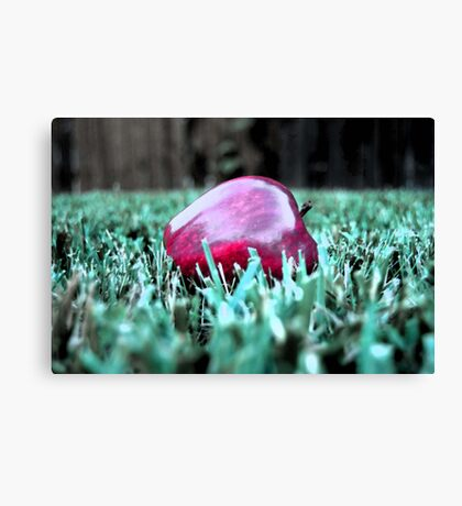 the price i paid for this Canvas Print