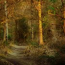 The Path On Grym's Dyke by A90Six