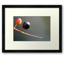 Gazing Ball Framed Print