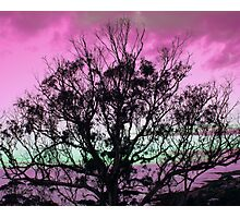 Purple Haze Photographic Print