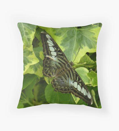 camouflage (Parthenos sylvia 'lilacinus') Throw Pillow