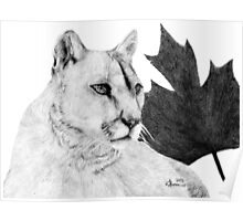Canadian Cougar Poster
