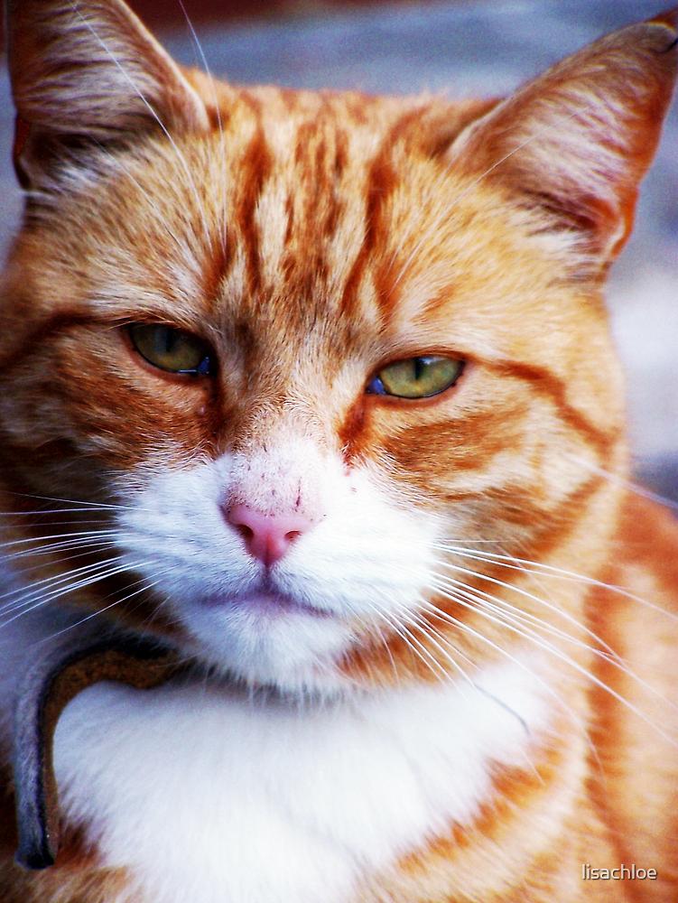 Mr Grumpy by lisachloe