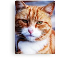 Mr Grumpy Canvas Print
