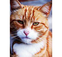 Mr Grumpy Photographic Print