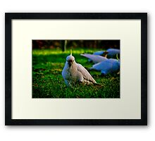 """Concentrating on Lunch"" Framed Print"