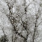 Trees through the Ice by leslie wood
