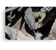 Lace Monitor Canvas Print