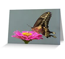 The Dancing Butterfly Fest Greeting Card