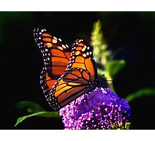 Monarch Butterfly on Purple Photographic Print