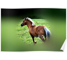 Galloping Gallantly Poster