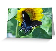 Awww,Butterfly All Black and Blue  Greeting Card