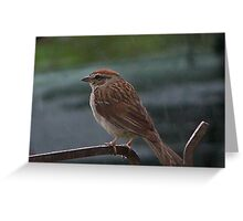 The Song Sparrow in the Rain Greeting Card