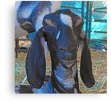 Face-to-goat face 3 Canvas Print