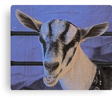 Face-to-goat face Canvas Print