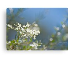 Evans Crown Wildflowers Canvas Print