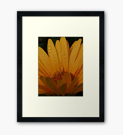 Diamond Drop Flower Framed Print