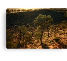 Desert Oaks Canvas Print