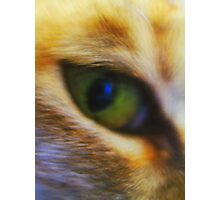 Eye of a Tiger in the Heart of a Tabby Photographic Print