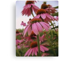 Layers of Pink Canvas Print