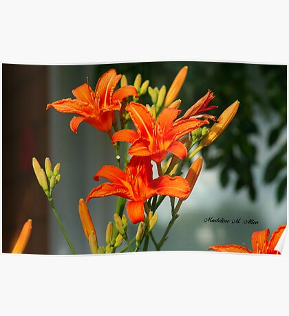 ORANGE DAY LILIES Poster