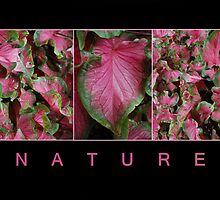 Nature by Judy Yanke Fritzges