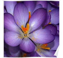 macro floral photography Poster