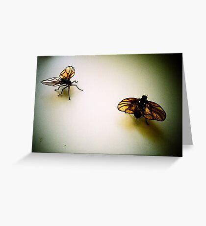 Flies Greeting Card