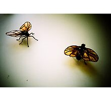 Flies Photographic Print