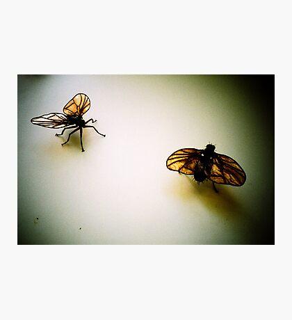 Flies Photographic Print