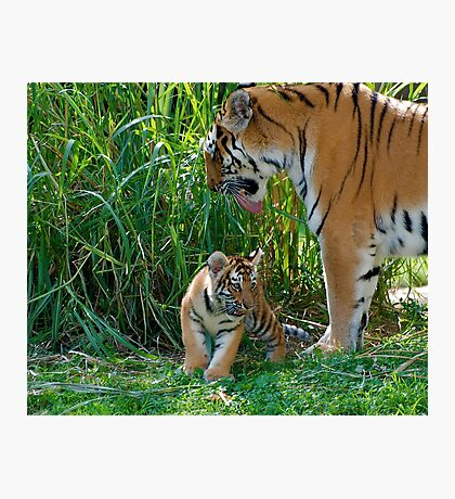 Well protected Photographic Print
