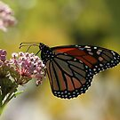 Butterfly and Blooms 4 by Gregg Williams