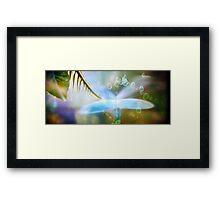 Borrowed Wings Framed Print