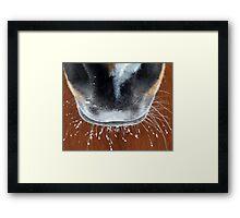 Frosty Muzzle Framed Print