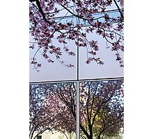 Spring Blossom Reflections and Architecture (1) Photographic Print