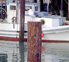 Seagull on Fisherman's Wharf Pylon by SteveOhlsen