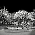 Your Carriage Awaits, My Dear by AcadianaGal